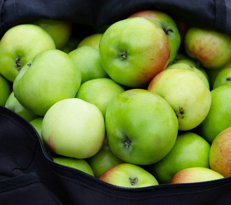 Aberlour Primary Pick Apples